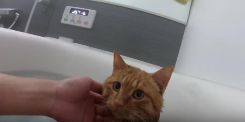 お湯につかる猫