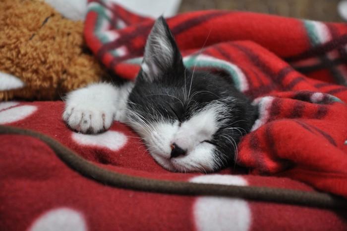 毛布の上で眠っている猫