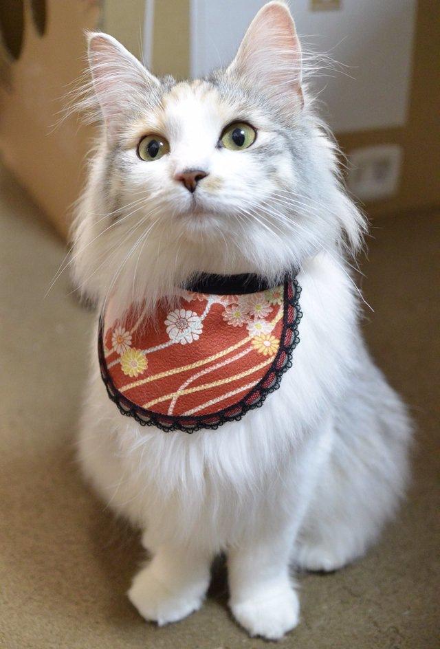 スタイのモデル猫