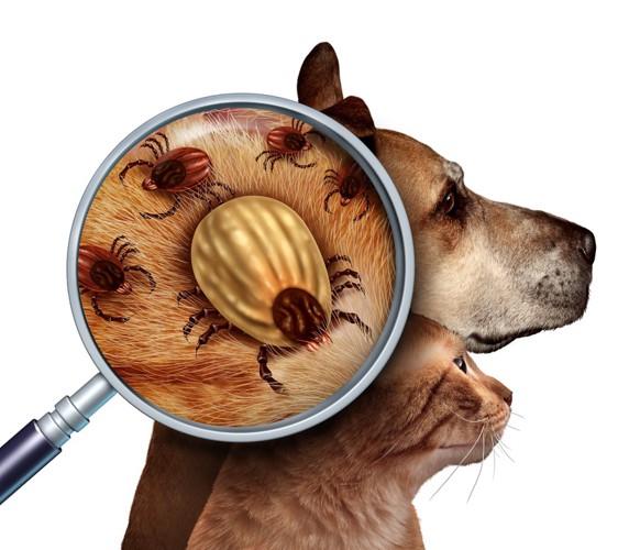 犬と猫のダニ