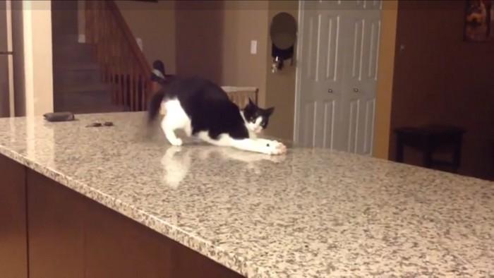 威嚇姿の猫