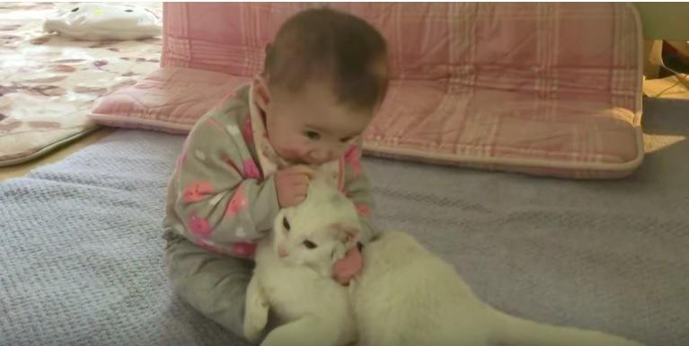 猫の耳をかむ赤ちゃん