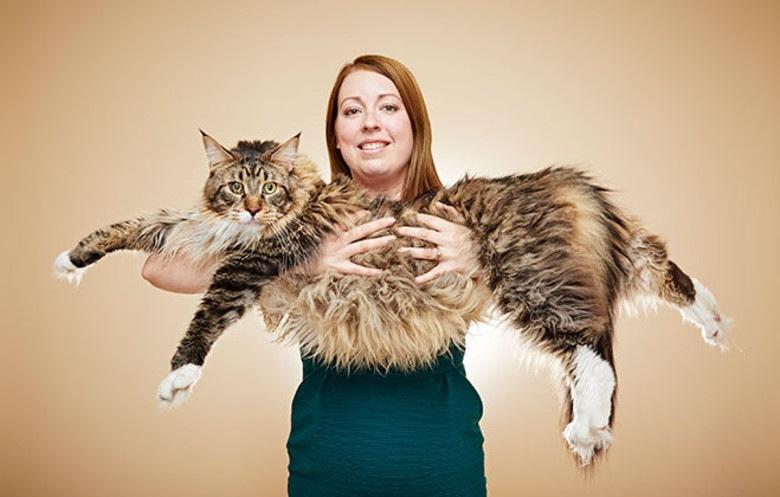 長い猫ルド