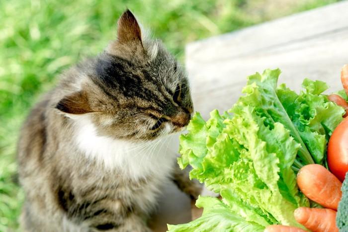 外にいる猫と野菜