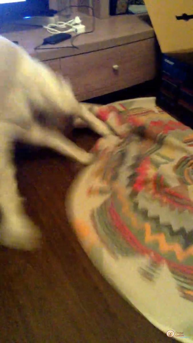 追いかける犬