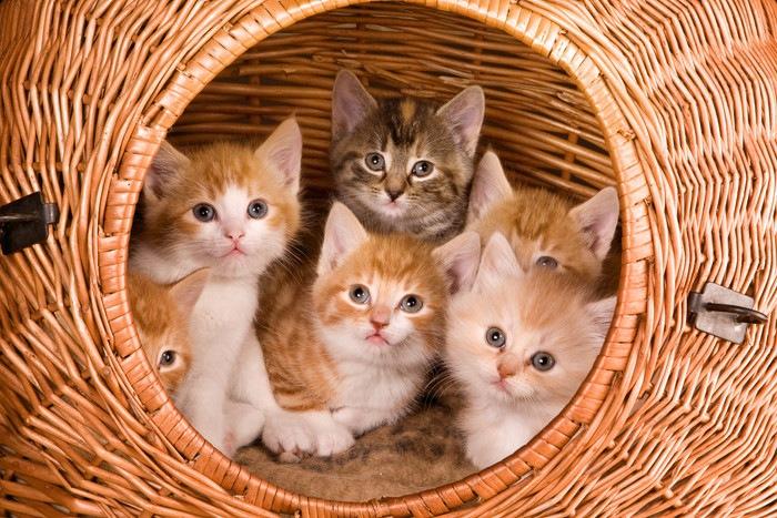 カゴからのぞく子猫たち