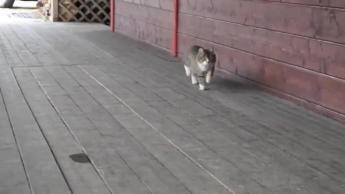 アメリカアニメにでてくる猫のよう