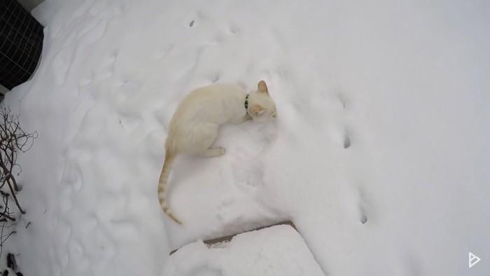 雪の匂いをかぐ