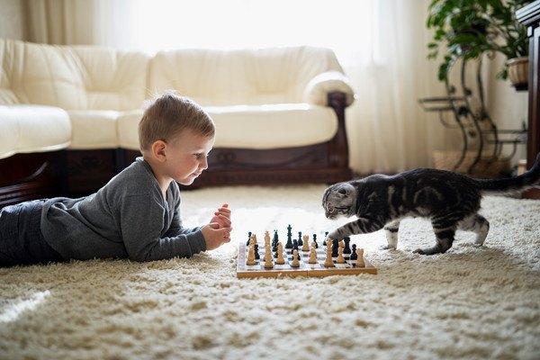 チェス盤と子供と猫