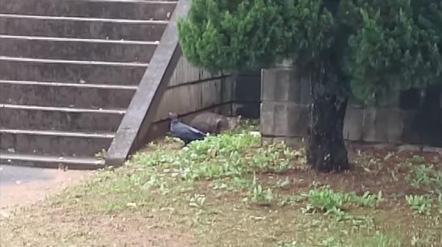 茶色い母猫とカラス