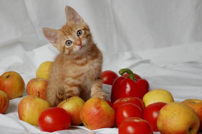 くびを傾げる子猫とりんご