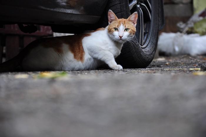 車体の下から出てくる猫