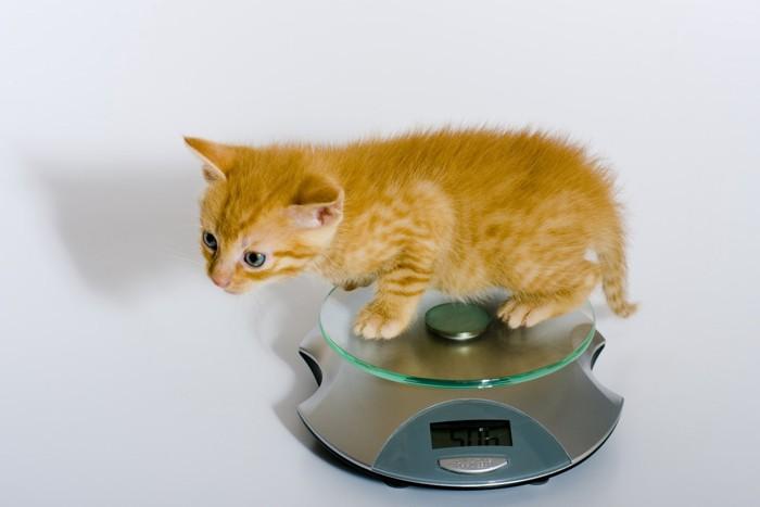 子猫と測り