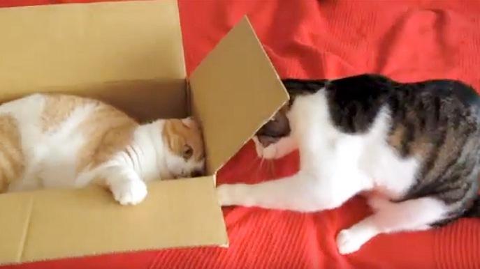 箱の中の猫と外から見ている猫