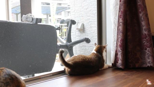 体制を戻す猫