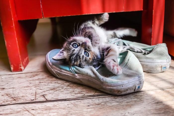 靴の上に寝転がる子猫