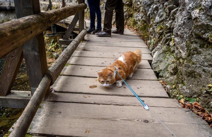 わたり橋の真ん中にいる猫