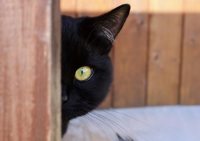 物陰から顔を半分のぞかせている黒猫