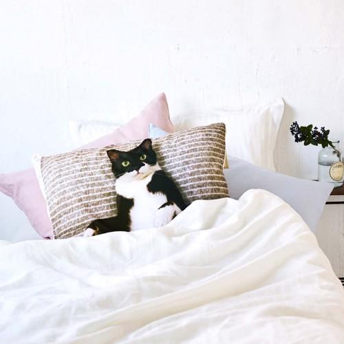 ギズモさん枕カバー