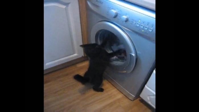 洗濯に猫パンチする猫