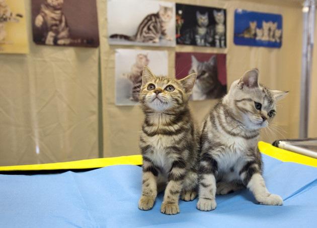 展示されている猫