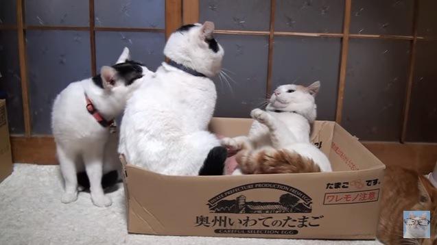 画面左端の猫、隣の猫を甘噛み