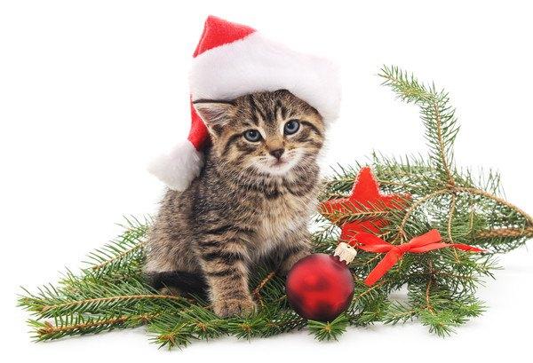 クリスマスのかぶりものをする猫