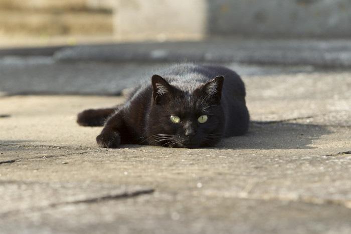 地面に寝てこちらをみる黒猫