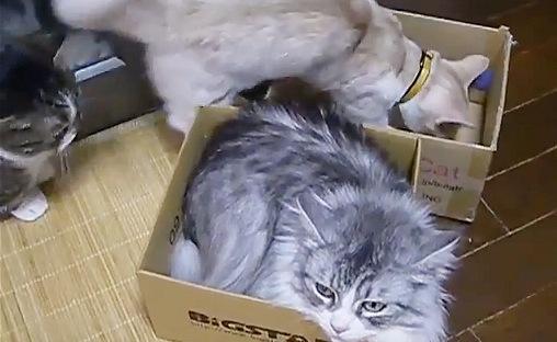 箱に集まる猫たち