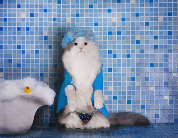 お風呂場に立つ猫