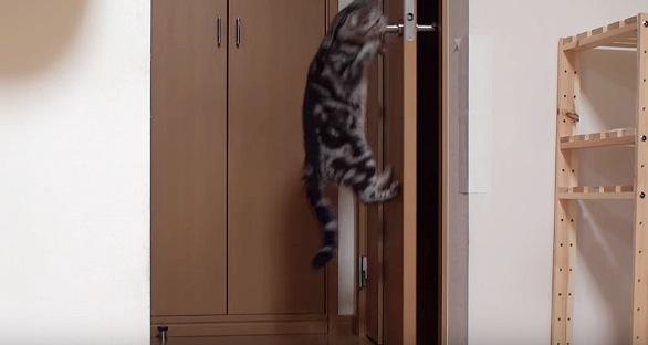 ドアノブに引っかかる猫