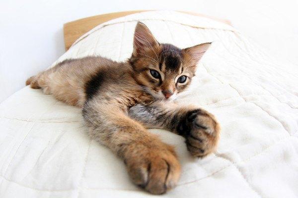 ベッドの上のソマリ