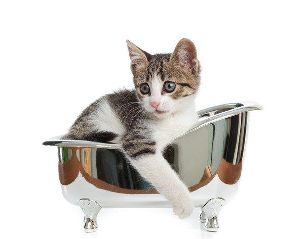 無理やりシャワーをかけられる猫
