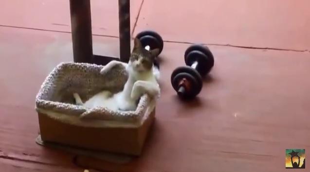 箱に入って座る猫(遠くから撮影)