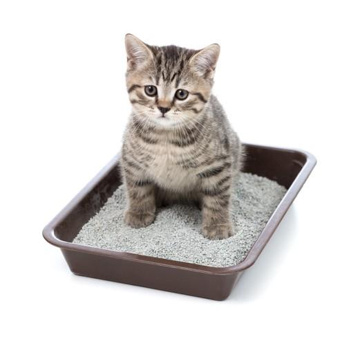 トイレ中の子猫
