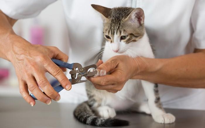 病院で爪切りされている猫