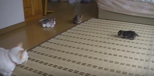 取り囲む猫