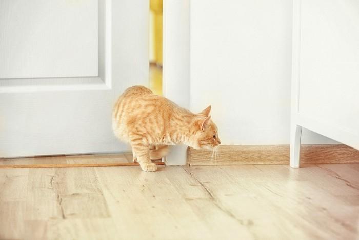 忍び足で歩く猫