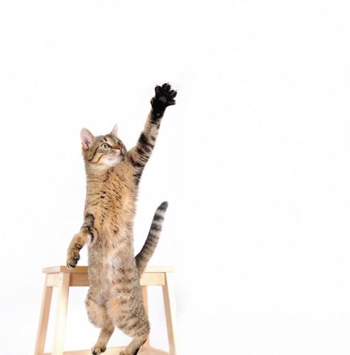 手を伸ばして立ち上がる猫