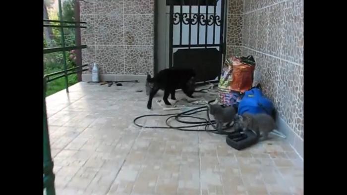 連れて行かれる猫