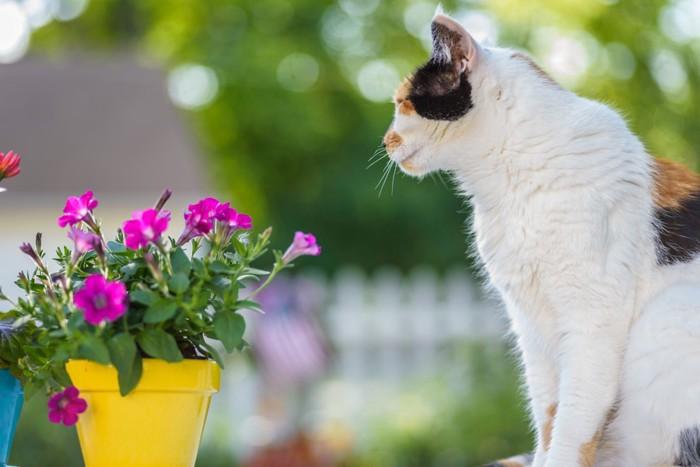 ピンクの花と横を向いて座っている三毛猫