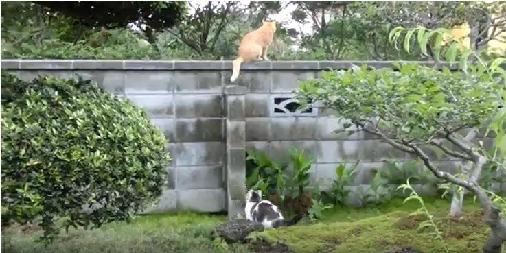 塀の上の猫と下に座る猫