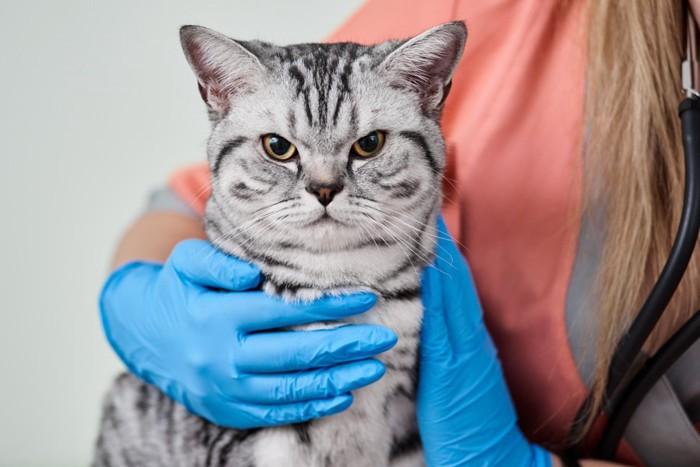 獣医師と猫