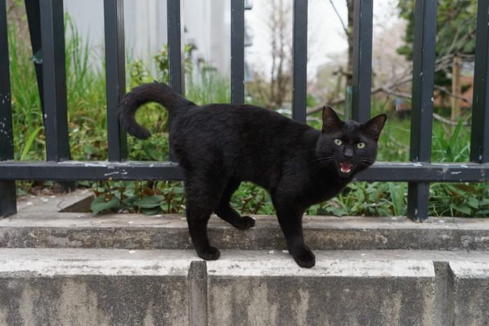 黒猫が無く