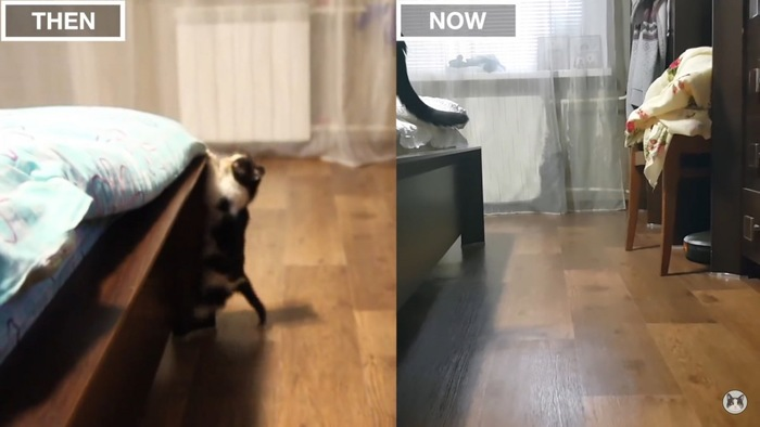 ベッドに登る猫