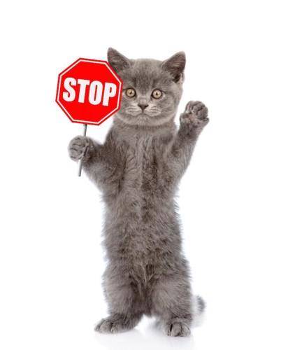 STOPの看板を持ったグレーの猫