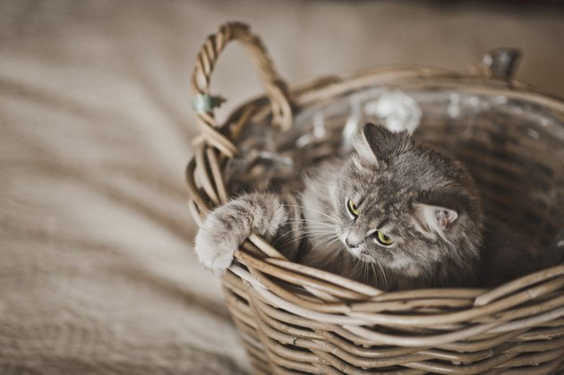 カゴから前足を少し出す猫の写真