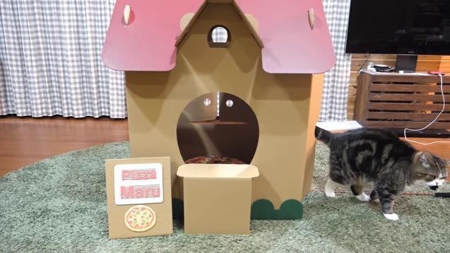 ハウスから出る猫