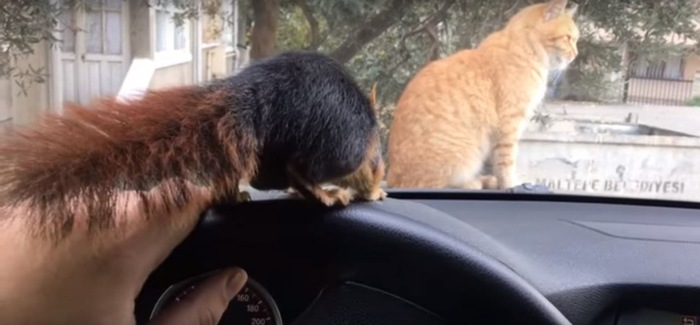 フロントガラス越しの猫とリス