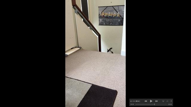 階段を上りきった猫